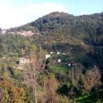 kusando (2)